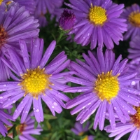 Kwiatypodpłotem alboporamarcinków